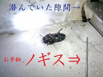 2009 07 18_0106.JPG
